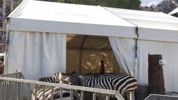 A pLe Zebre, fotografate domenica 4 febbraio, mentre attendono di entrare nell'arena del Festival New Generation Ft.©MCD