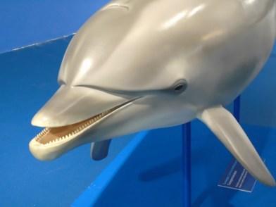 delfini, una tursiope e il capodoglio Salvatore, nella Sala dei cetacei del Museo Doria di Genova