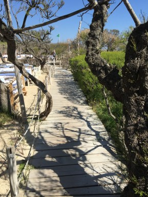 The tree shadows on the walkway @CelinaLafuenteDeLavotha