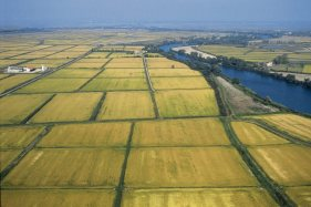 Air shot of rice plantation Camargue . Biosphoto / Régine Rosenthal