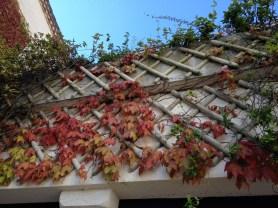 Ivy decorating the walls @CelinaLafuenteDeLavotha