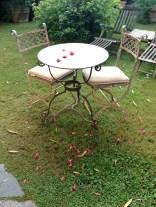 Petals on the table @CelinaLafuenteDeLavotha
