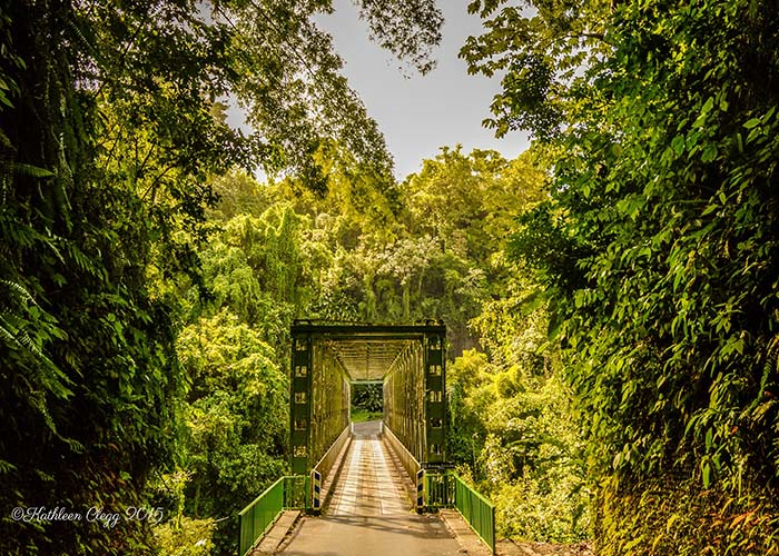 Grande Rivere Tropical Rain Forest