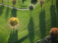 wales-autumn-tree_92857_990x742