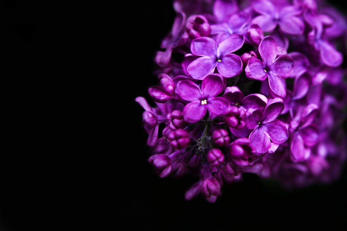 Violet harmony