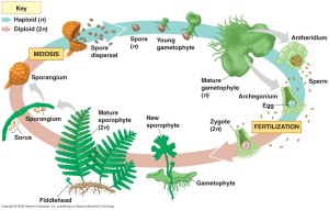 Plants Life Cycle & Structure | Mona G9A
