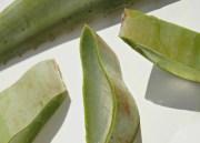 Comment utiliser une feuille d'Aloe Vera ?