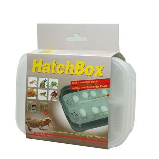 lucky reptile HatchBox