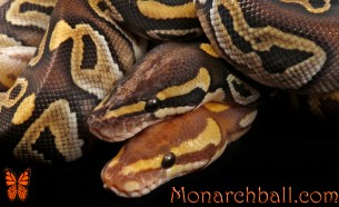 Monarch Mojave and Mojave