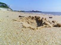 photo du mois juillet 2013 : au ras du sol