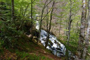Bois de Gudanes
