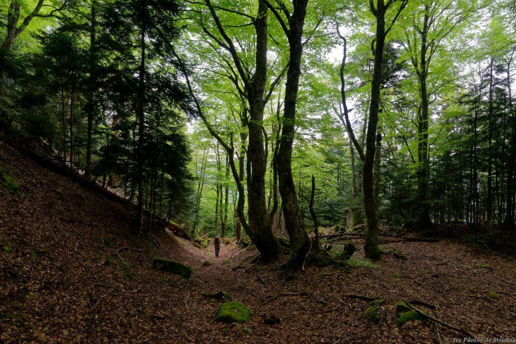Ambiance dans la forêt
