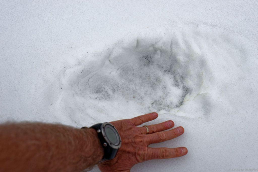 L'ours était là