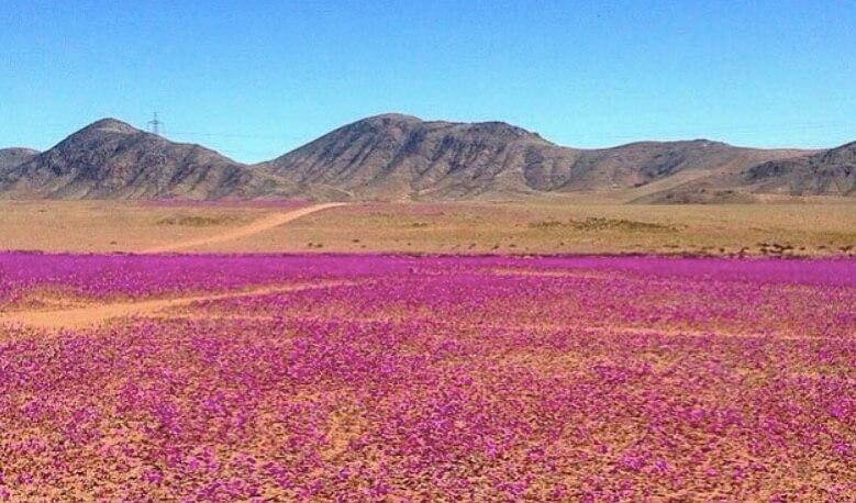 Le désert d'Atacama Michel Mougenot