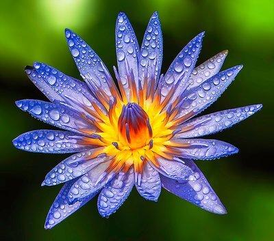 Sexe, mort et lotus bleu , Carré De Sable