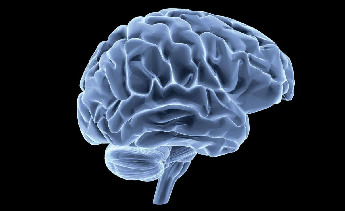 Régénérer son cerveau : des outils rapides et faciles