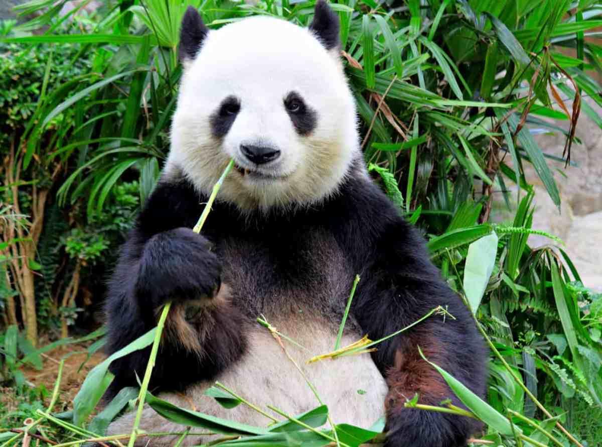 Guide : la bibliothèque Pandas