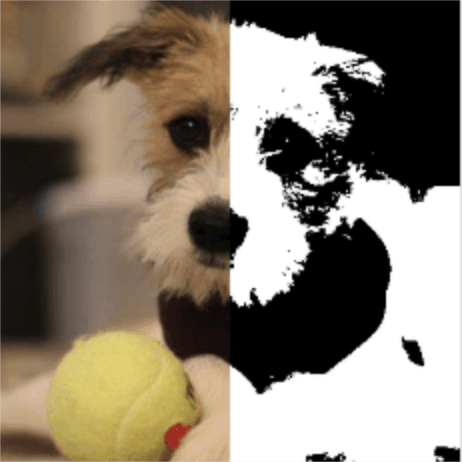 image chien 1