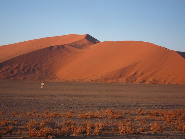 Photo d'un Oryx devant les dunes de Sossuslvei
