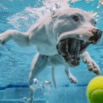 Here Are The Best Places For Your Dog To Swim