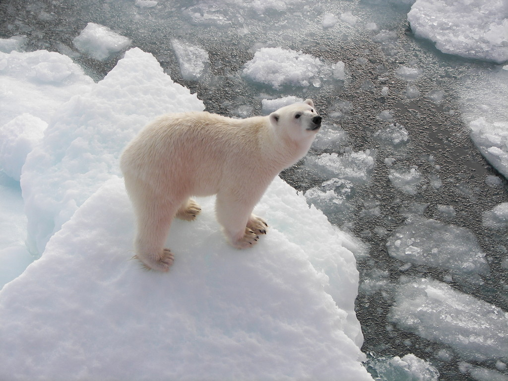 Polar Bears Standing Feet