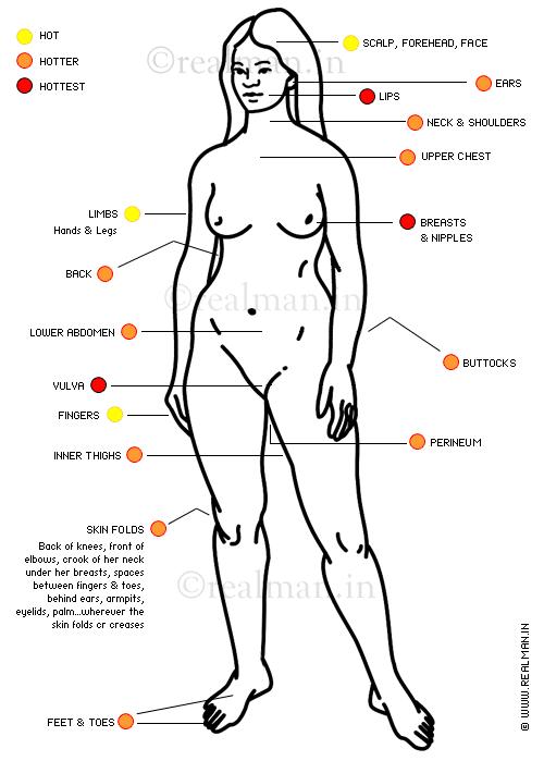 schéma anatomique zones érogènes