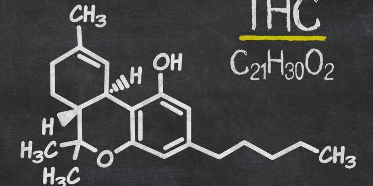 CBD E THC: scopriamo bene le differenze