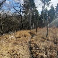 Garmin Mókus kör - Terepfutás a Budai-hegységben