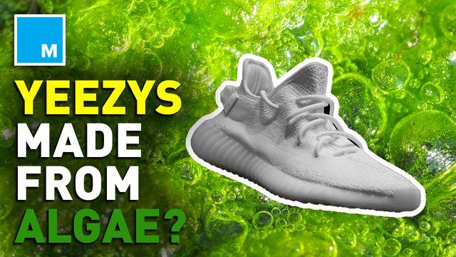 Kanye West unveils newest Yeezys made with algae