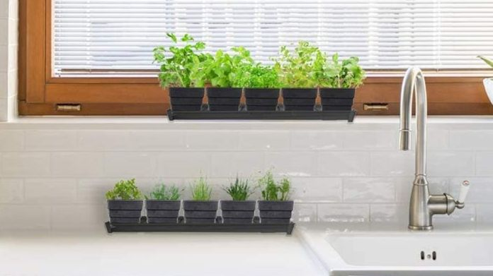 You can work indoors with a herb garden on the windowsill.