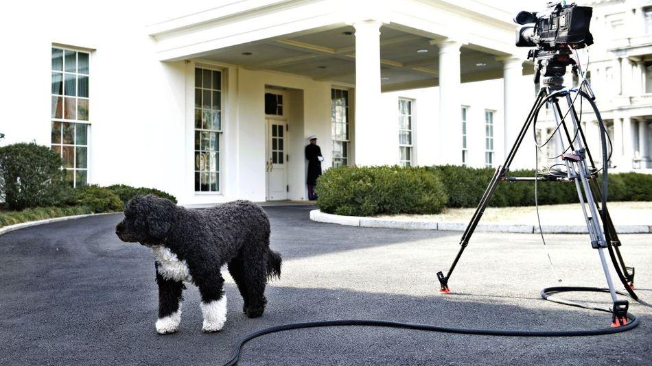 lead img obama family dog bo died