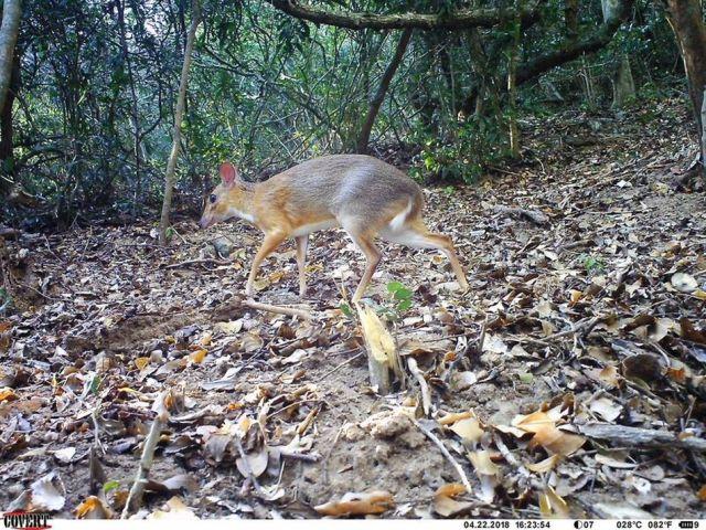 Mouse deer!