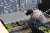 Farmer Zach Pickens checks on the cold frame which acts as a miniature greenhouse for microgreens like pea shoots, chives, kale, and celery.