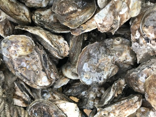 oyster close up.JPG