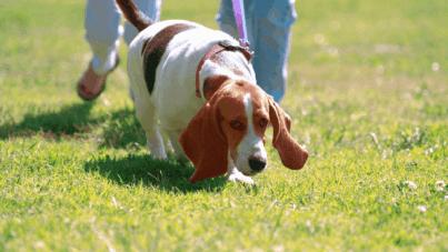 Make $500 dog walking fast