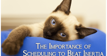 The Importance of Scheduling to Beat Inertia