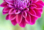 Exploring the Beauty of Floral Photography #2