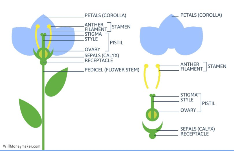 The Anatomy Of A Flower