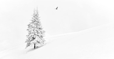 Ideas to Inspire Your Wintertime Photography