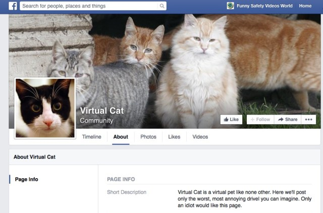 facebook money veritasium virtual cat