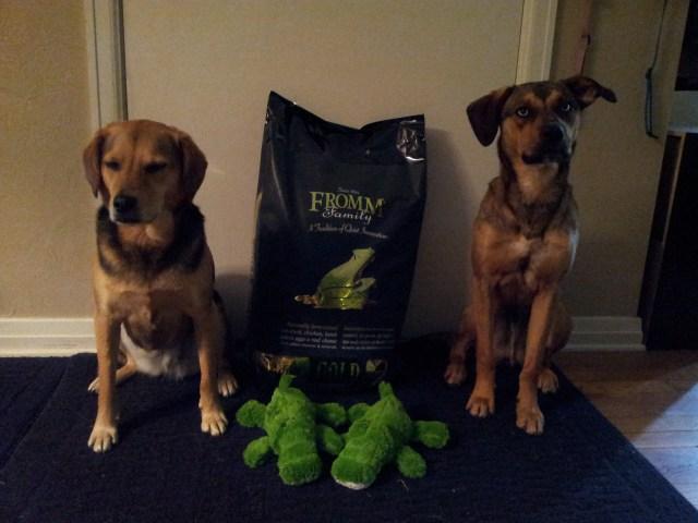 save money on dog food