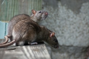 home maintenance tasks save money rodents