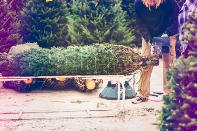 Live cheap Christmas trees