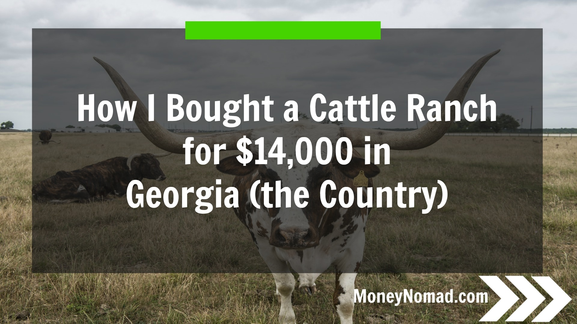 How I Bought A 98 Acre Cattle Ranch For $14,000 In Georgia (the Country)
