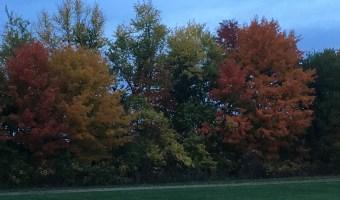 15 Frugal Fall Family Acitivities // Money Savvy Living #fall #autumn #family #familyfun #fallactivities #leaves #travel