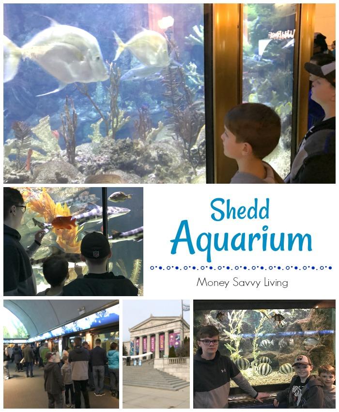 Museums in Chicago #chicago #choosechicago #aquarium #sheddaquarium
