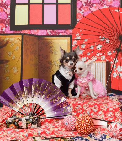 """SBIいきいき少短、「Pet博2019 in 横浜」に初出展!新年ならではの""""和""""な写真が撮影できるフォトブースを設置!"""