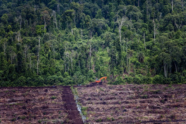 An excavator at the rainforest's edge in recently cleared peatland within the Duta Palma group's PT. Bertuah Aneka Yasa palm oil concession in Indragiri Hulu, Riau