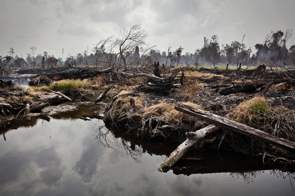 Charred tree stumps against the smoldering background in an area of recently deforested peatland near Tanjung Baru village, Pangkalan Kerinci subdistrict in Pelalawan regency, Riau province, Indonesia. The village lies beside PT. Pusaka Megah Bumi Nusantara (PMBN) – a palm oil company belonging to the Asian Agri group, a member of the Roundtable on Sustainable Palmoil (RSPO). This area, according to the most recent official charts, is covered by the Indonesia government's moratorium on the issuance of new permits in primary forests and peatlands.Thousands of peatland fires in the province - the majority within pulp and palm oil concessions - have caused record-breaking air pollution in Singapore and Malaysia, with the haze extending as far as Thailand.