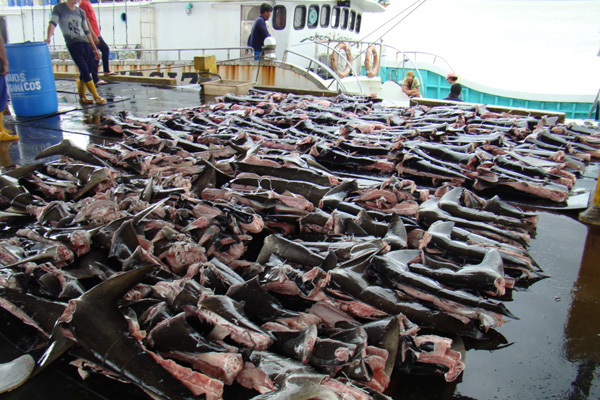remoción de aleta de tiburón